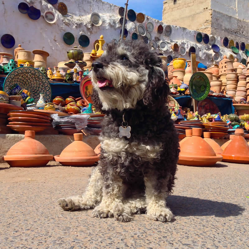 Willie at the pottery tajine market in El Jadida Morocco