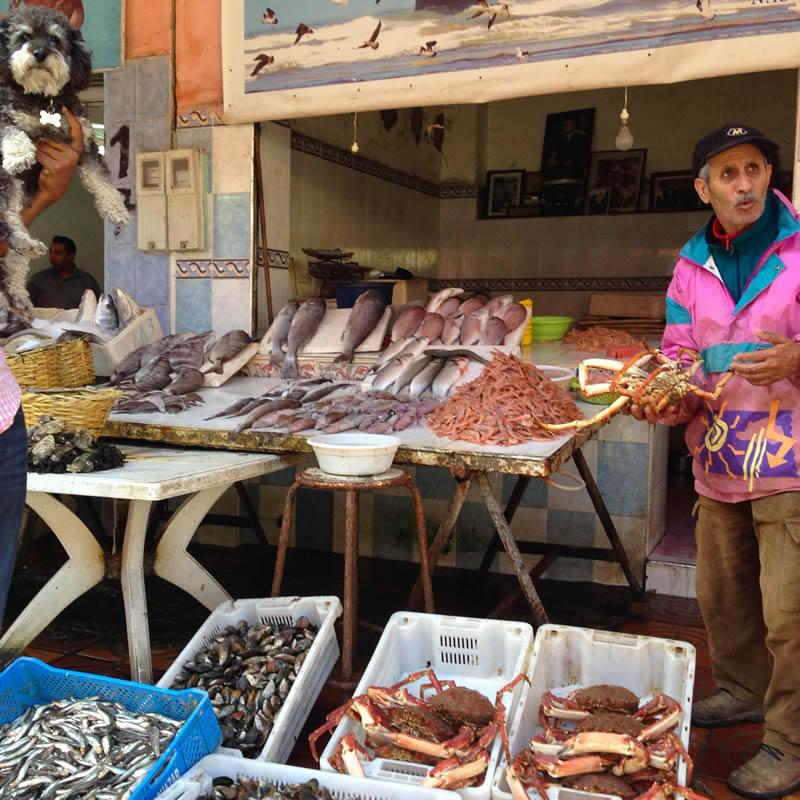 Willie visits the fish market in El Jadida Morocco