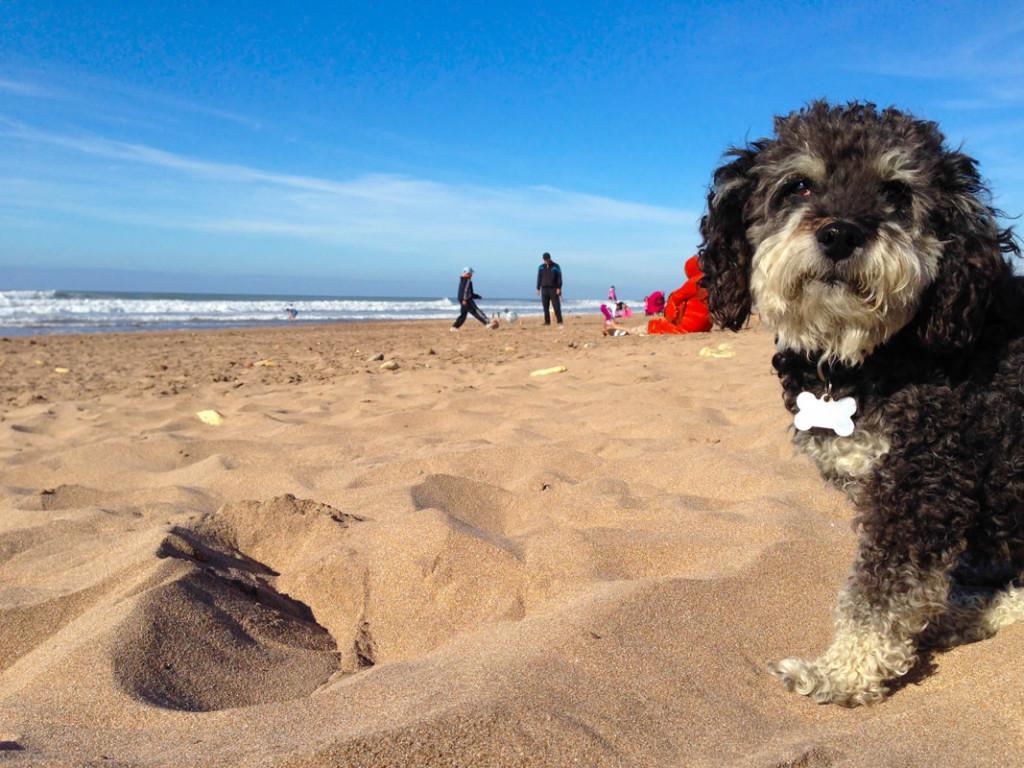 Willie on Azemmour Beach Morocco