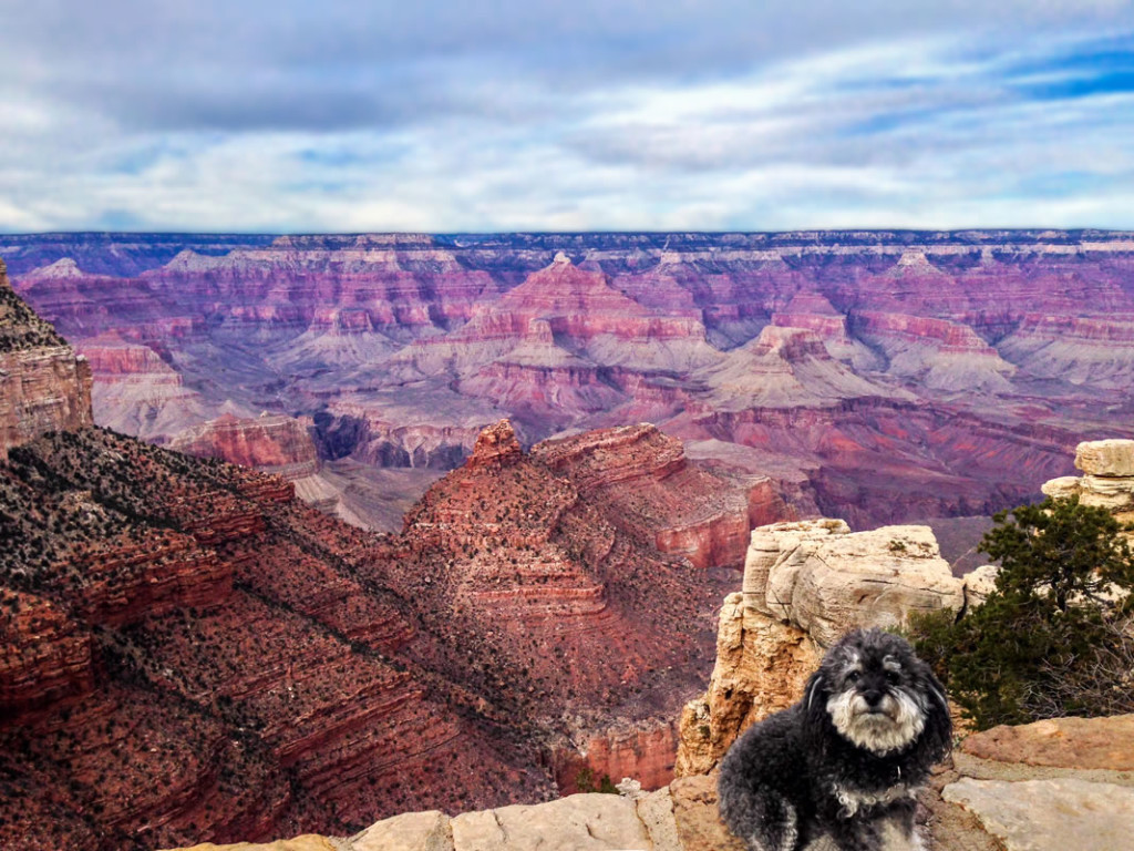 Willie sits on the ledge at The Grand Canyon in Arizona