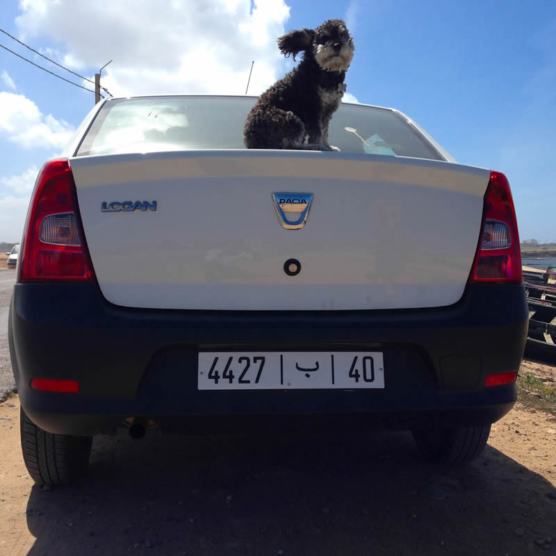 Willie sits on top of our trusty rental car in Morocco