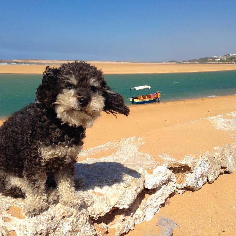 Willie near Safi Morocco