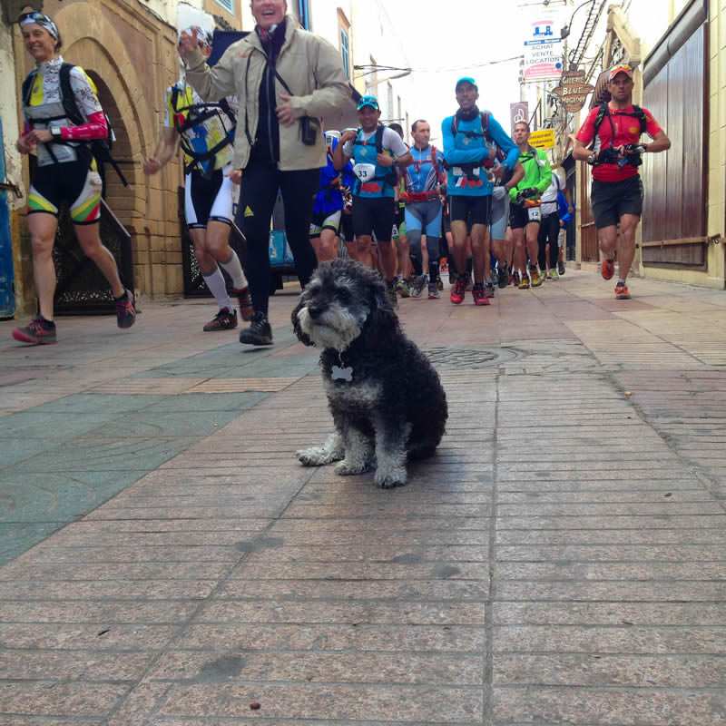 Willie sits while runners run past in Essaouira Morocco