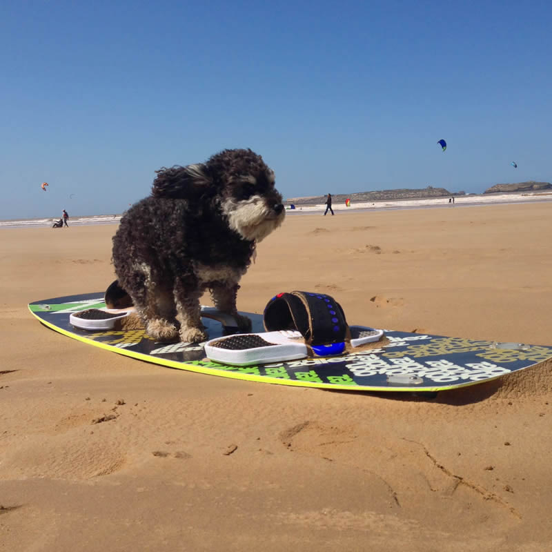 Willie practises his surf in Essaouira Morocco