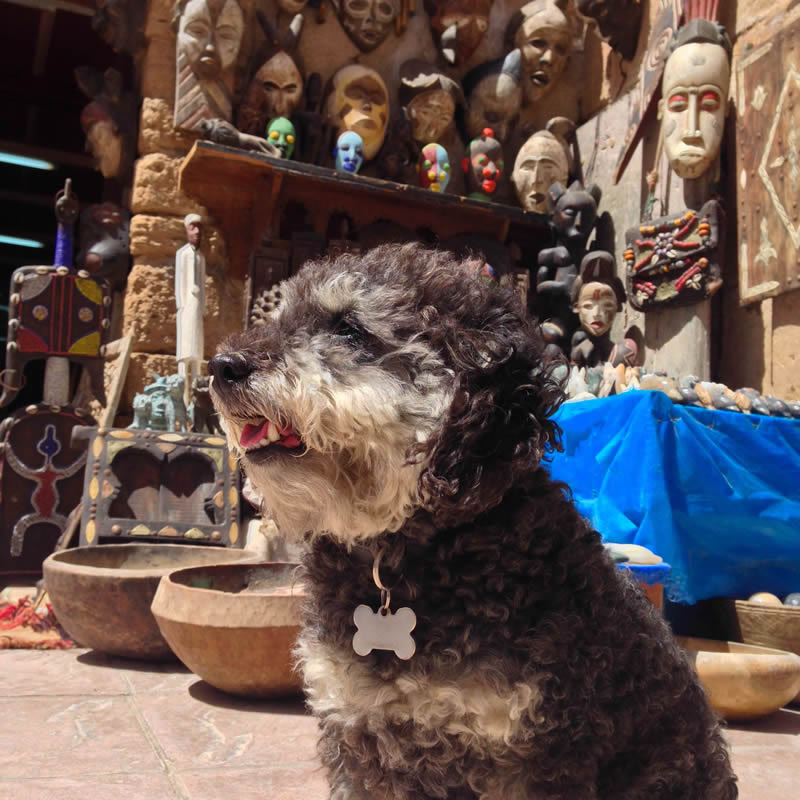 Willie in front of a gift store in Essaouira Morocco