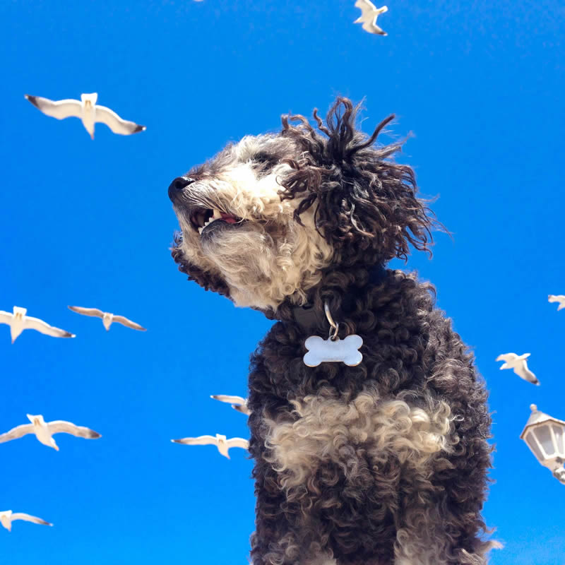 Willie in a sky full of seagulls in Essaouira Morocco