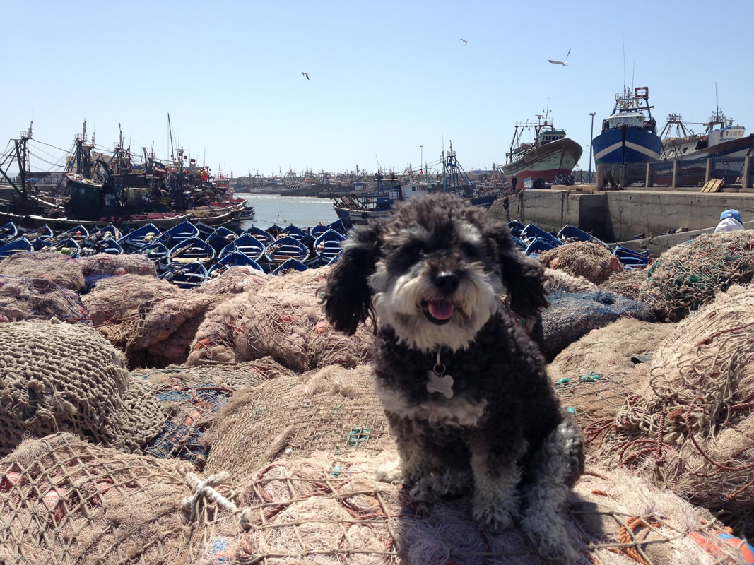 Willie in front of the fishing docks of Essaouira Morocco