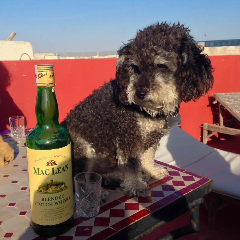 Willie and whiskey on the rooftop in Essaouira Morocco