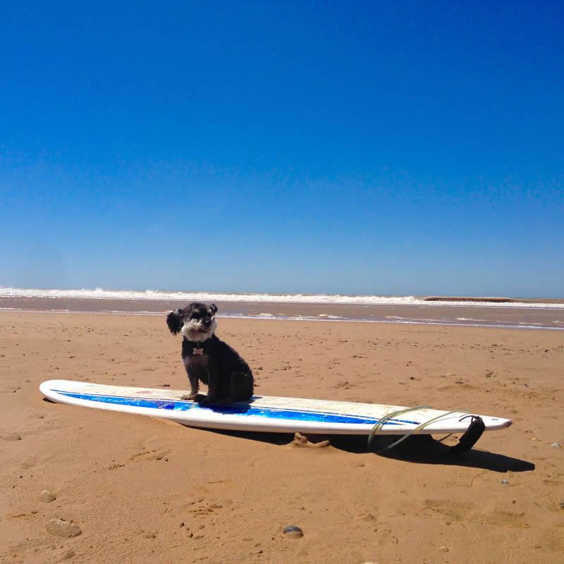 Willie tries some surfing in Imsouane Morocco
