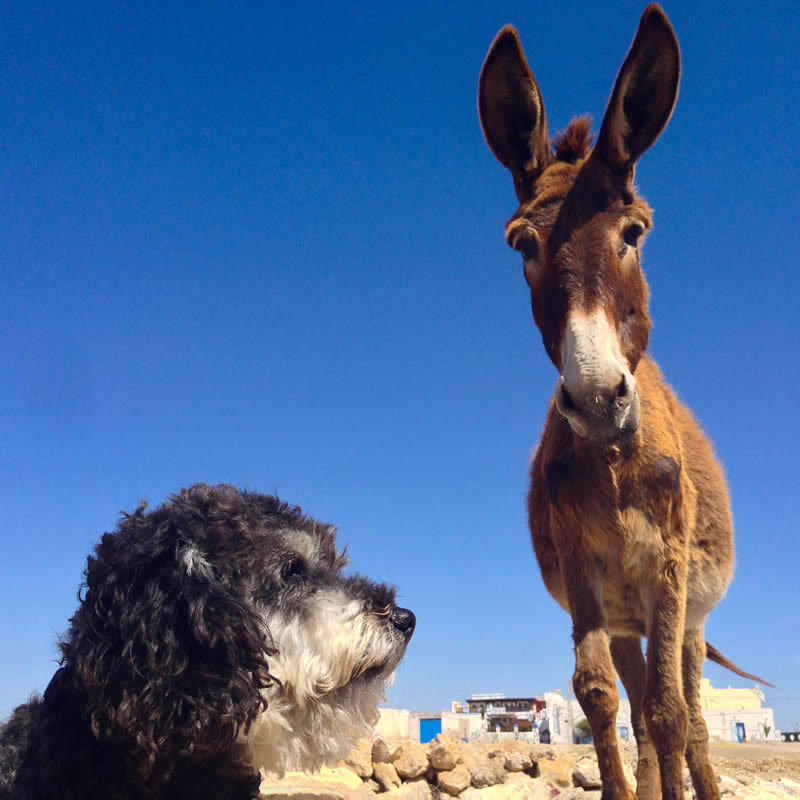 Willie next to a donkey in Imsouane Morocco