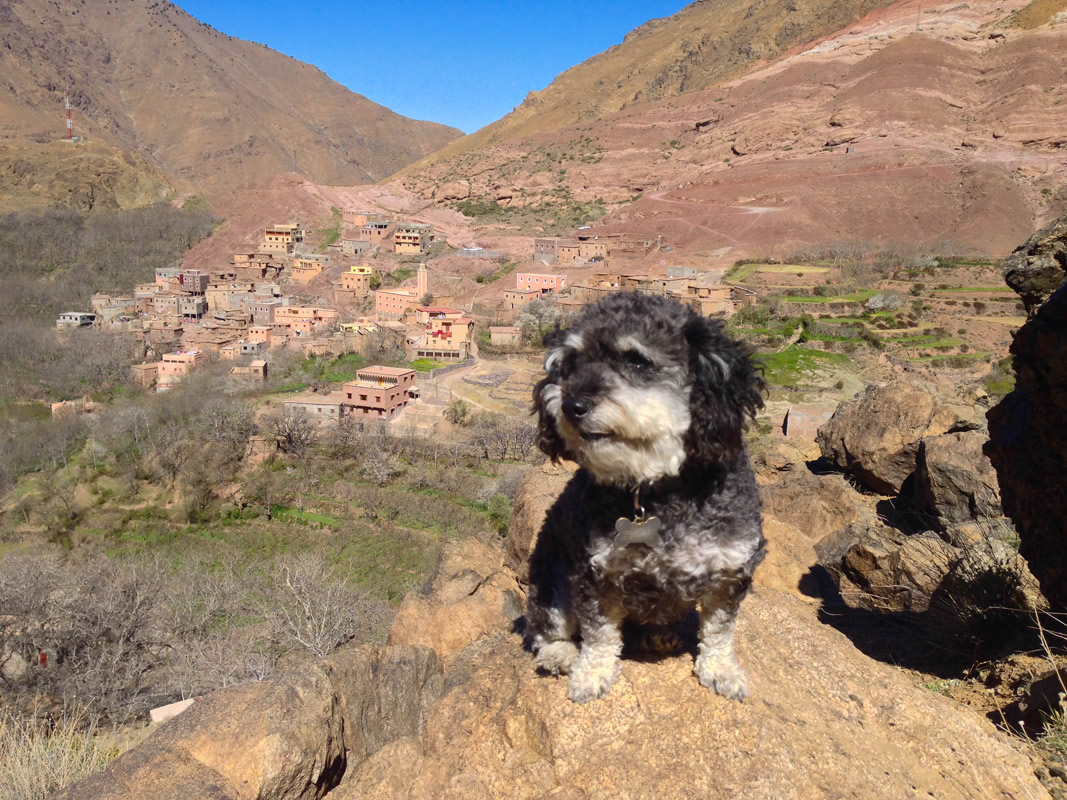 Willie hikes up the Atlas Mountains in Imlil Morocco