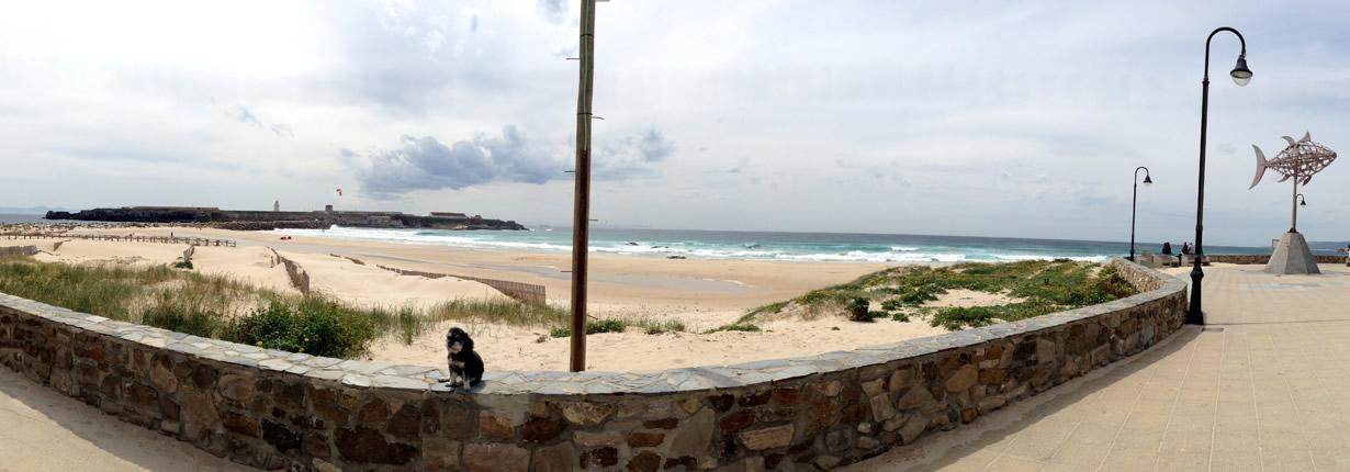 Willie sits on the boardwalk of Tarifa Spain