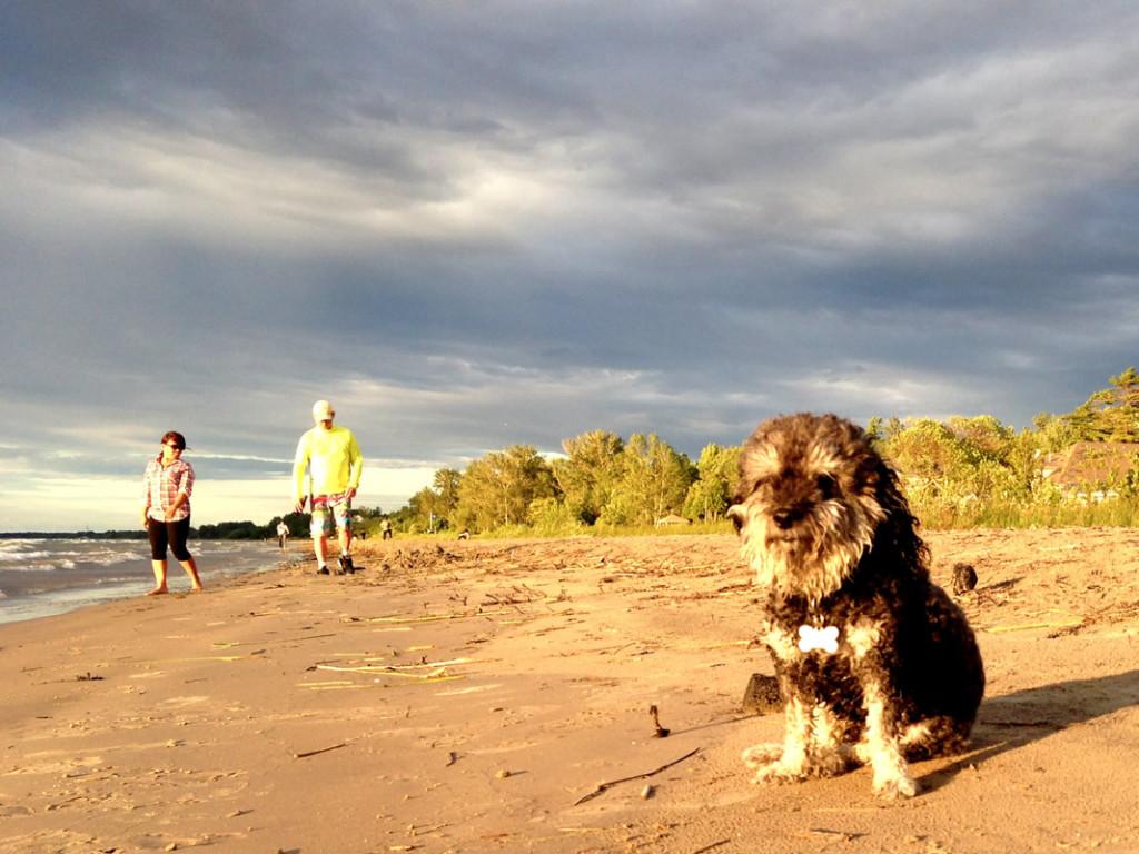 Willie in Wasaga Beach Canada