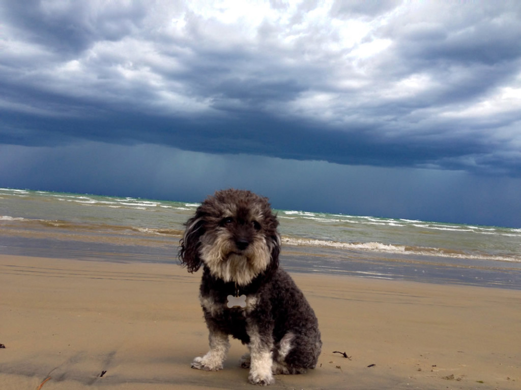 Willie watches a storm coming into Wasaga Beach Canada