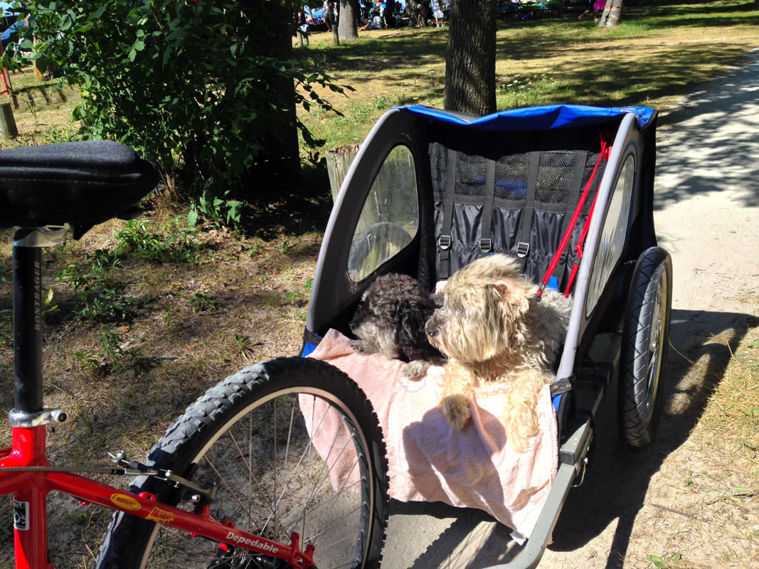 Willie shares a ride to Wasaga Beach Canada with Daisy