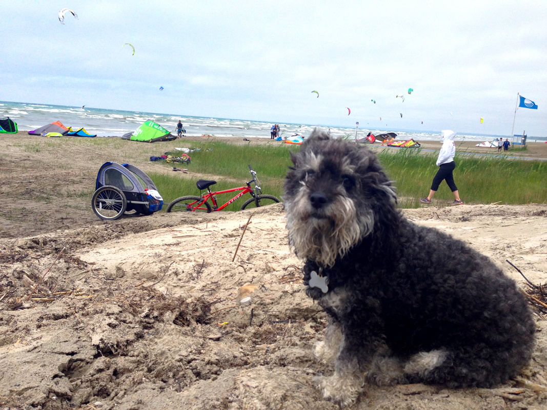 Willie in Wasaga Beach Canada with kite surfers