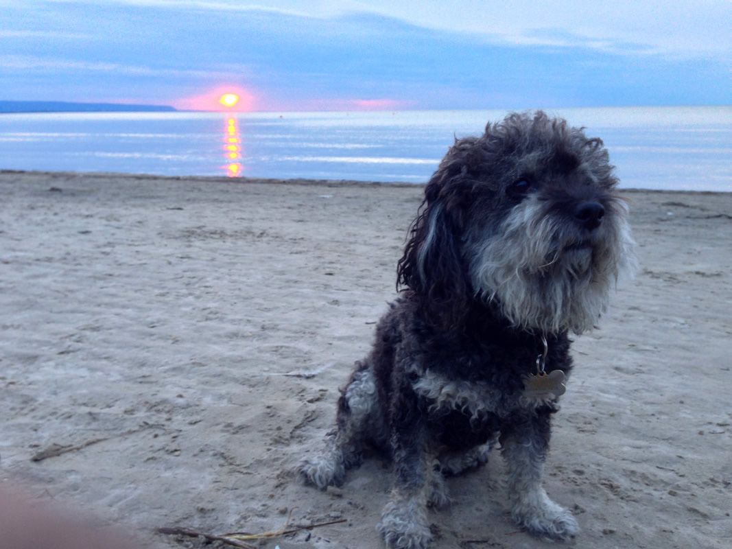 Willie at sunset in Wasaga Beach Canada