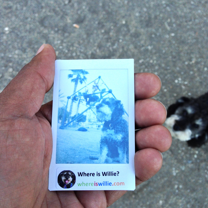 Polaroid of Willie the travelling dog