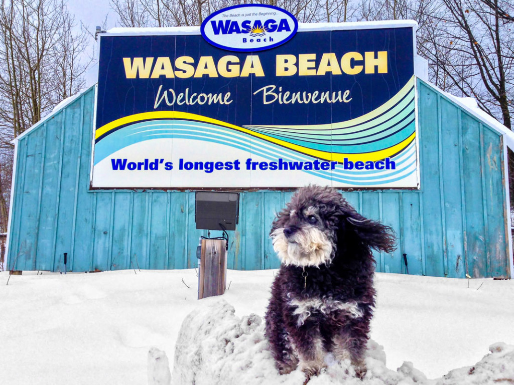 Willie at the welcome sign in Wasaga Beach Canada