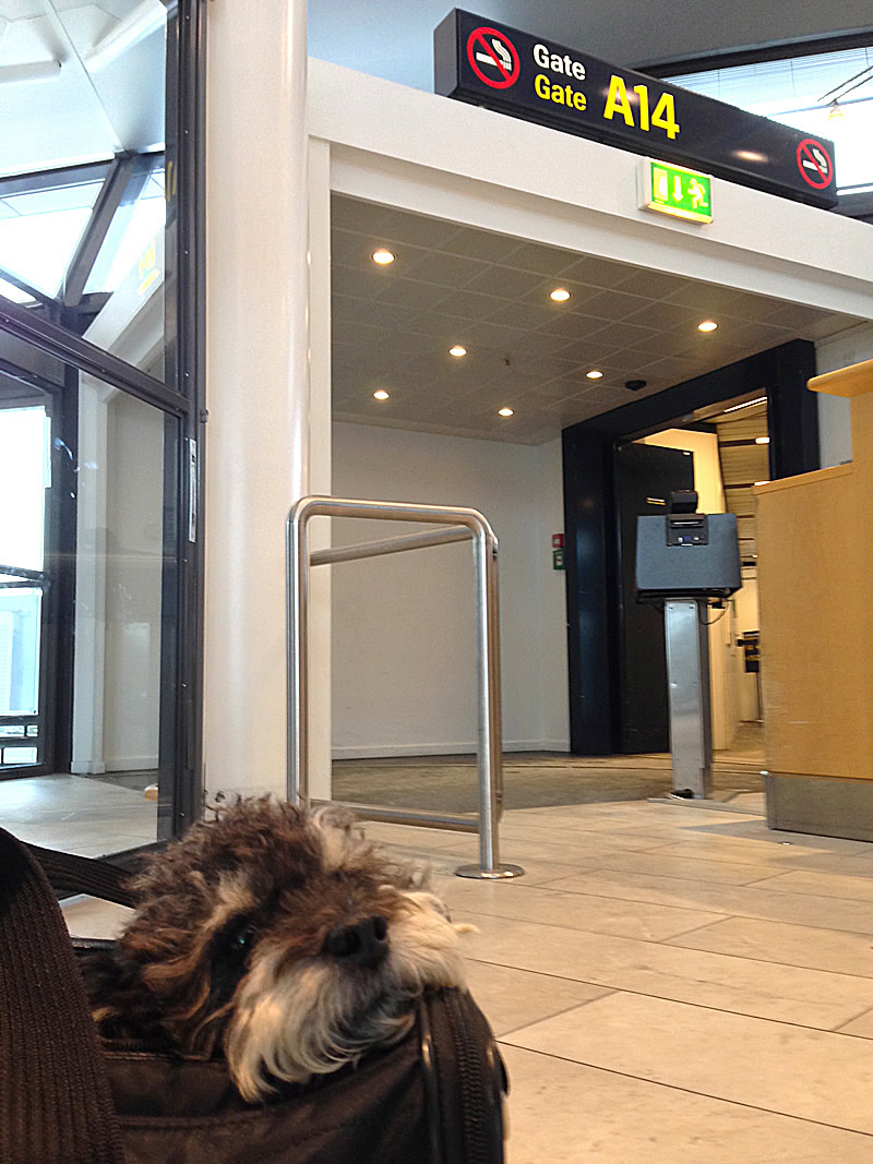 Willie waits at the gate in Copenhagen Airport