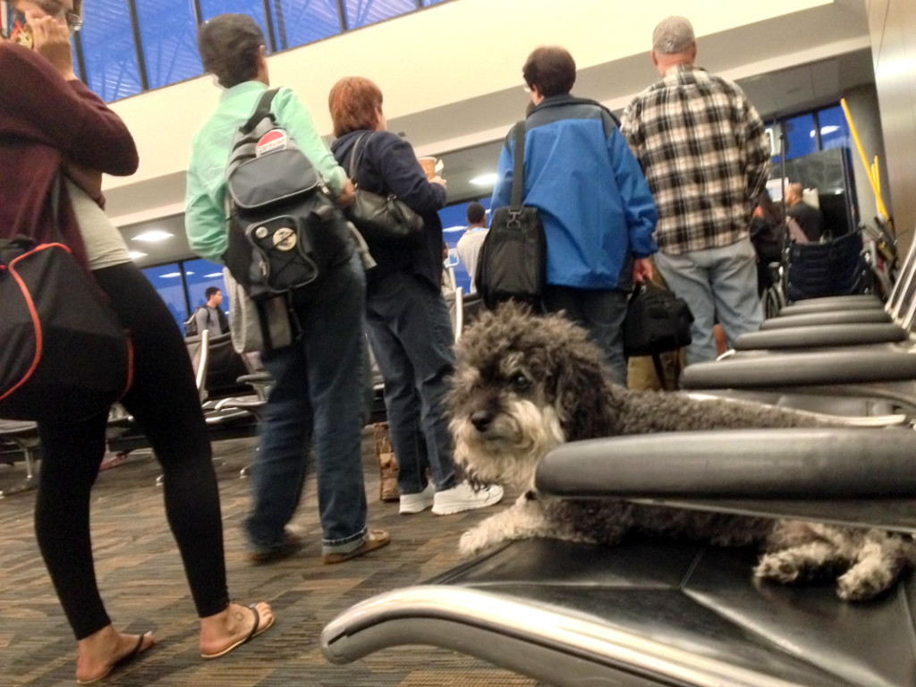 Willie waits to board his flight at Tampa Airport