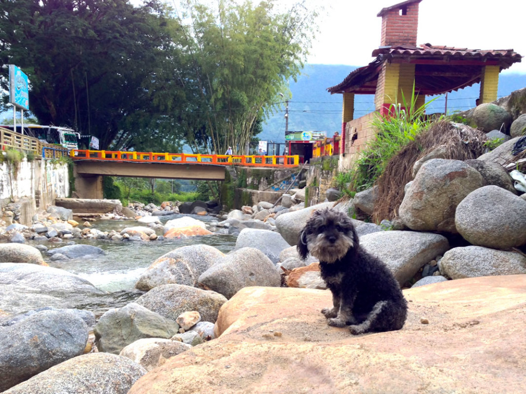 Willie hangs out by the river in Cocorna Colombia