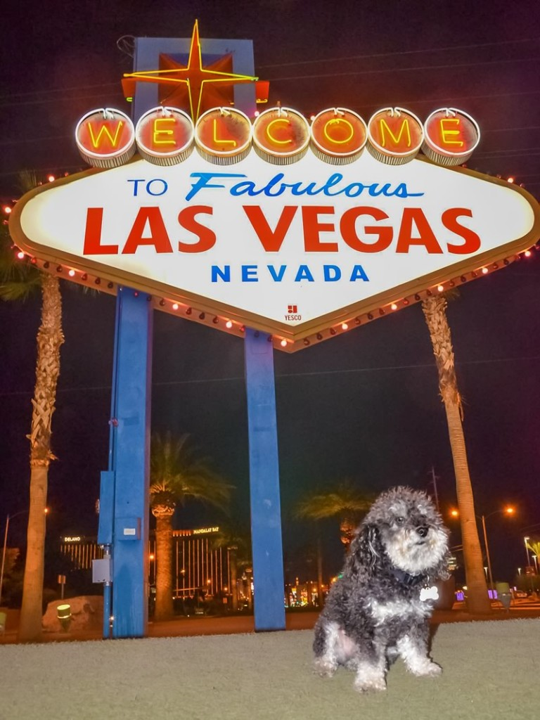 Willie in front of the Las Vegas Welcome Sign