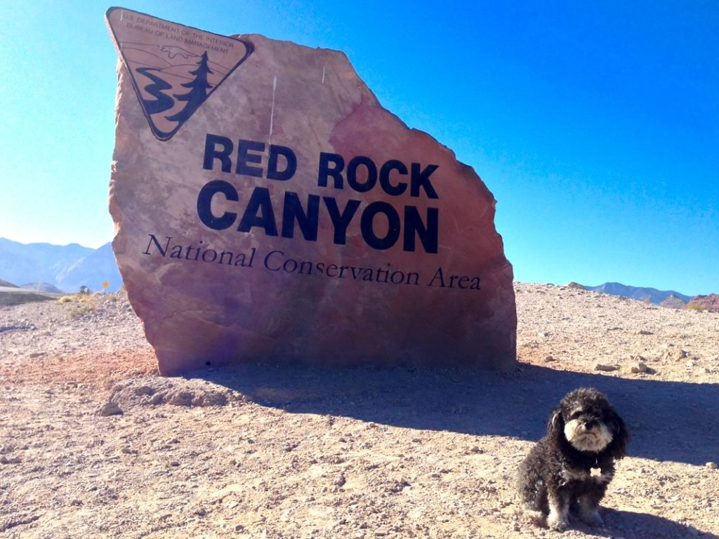 Willie tours Red Rock Canyon in Nevada