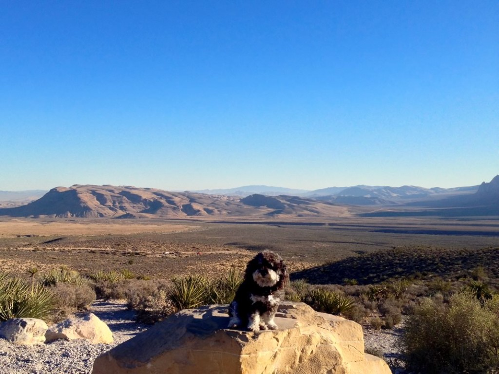 Willie at Red Rock Canyon National Conservation Area in Nevada