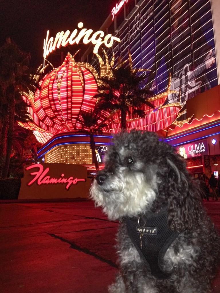 Willie at the Flamingo in Las Vegas