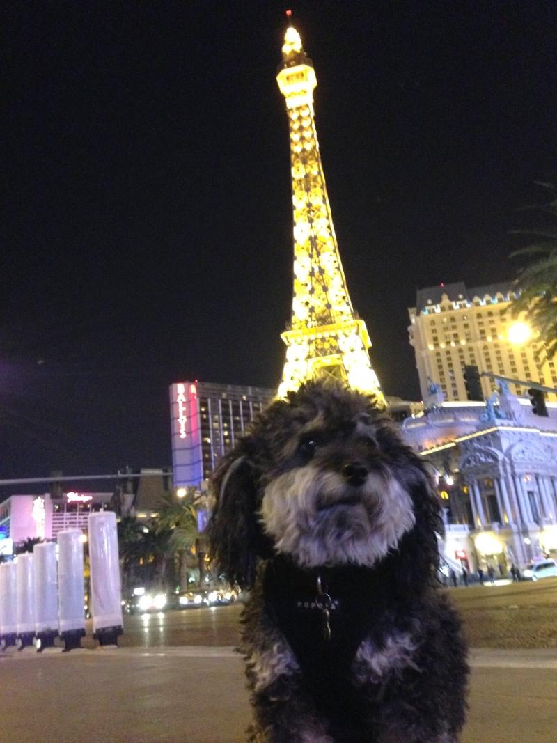 Willie in front of Paris Las Vegas
