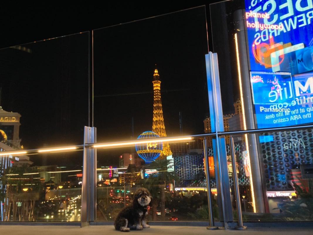 Willie on the Las Vegas Strip at night