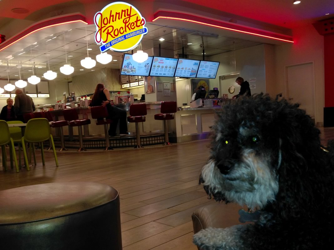 Willie waits for his late night burger at Johnny Rockets in Las Vegas
