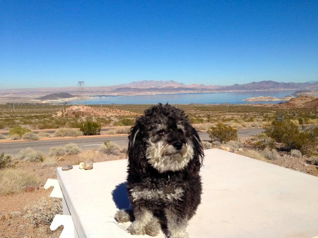 Willie in front of Lake Mead in Nevada