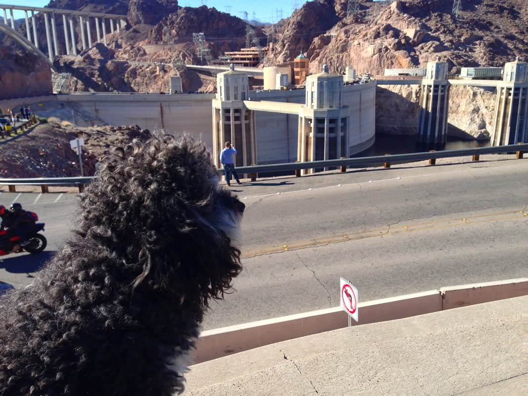 Willie at the Hoover Dam