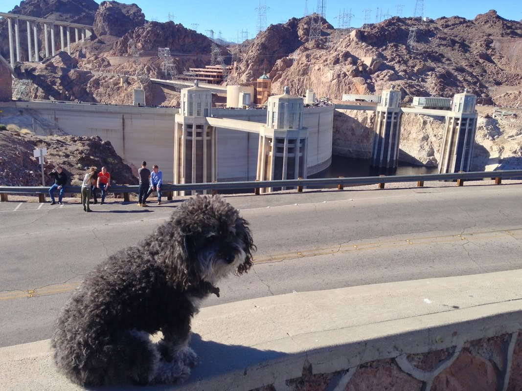 Willie at Hoover Dam on the border of Nevada and Arizona