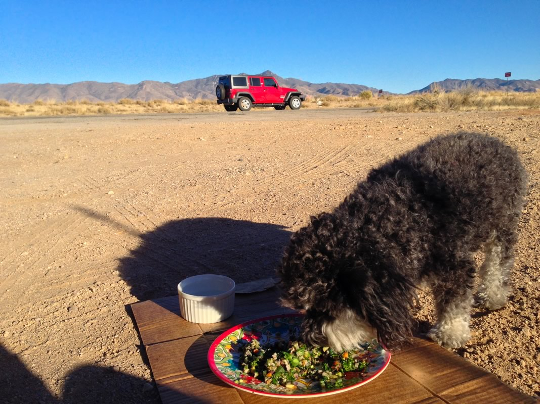 Willie stops for lunch along route 66