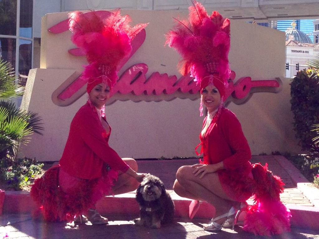 Willie with showgirls of the Flmingo in Las Vegas