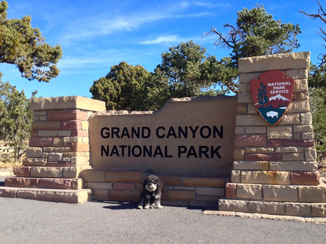 Willie at the Grand Canyon in Arizona