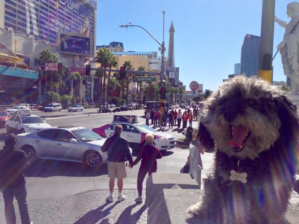 Willie on the Las Vegas Strip