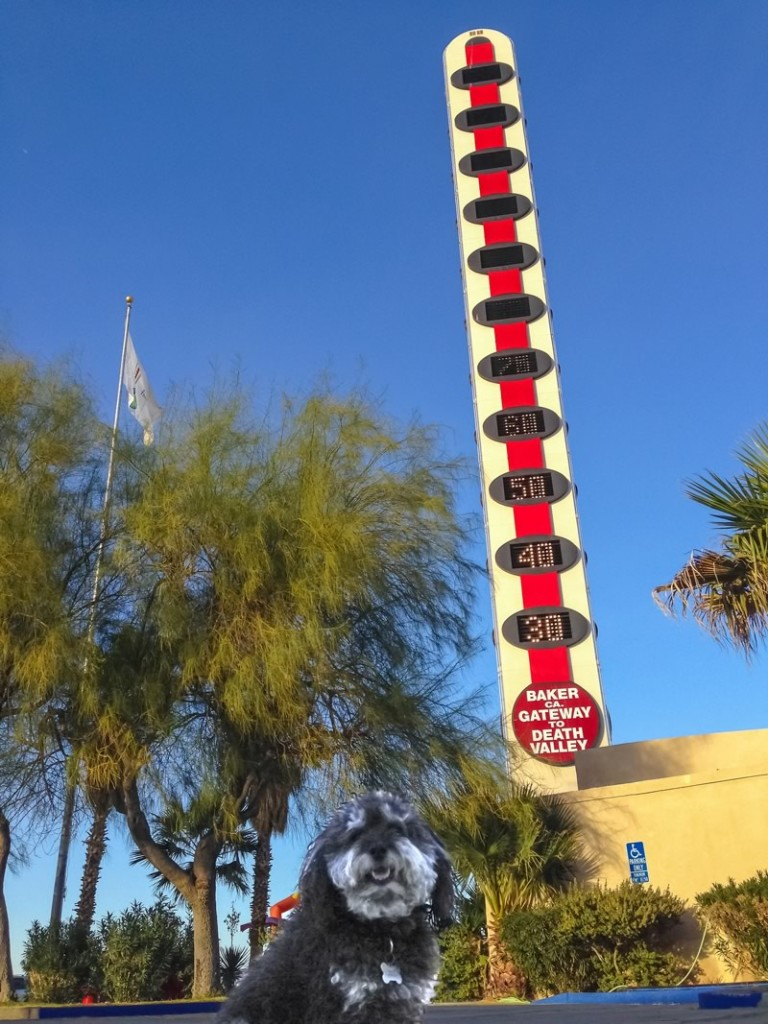 Wilie at The World's Tallest Thermometer in Baker California