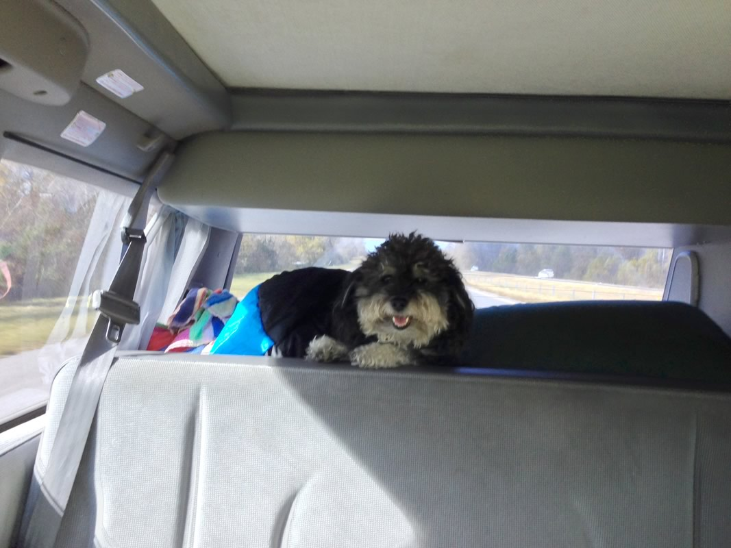Willie enjoys his spot in the van as he rides along I-10 in Louisiana
