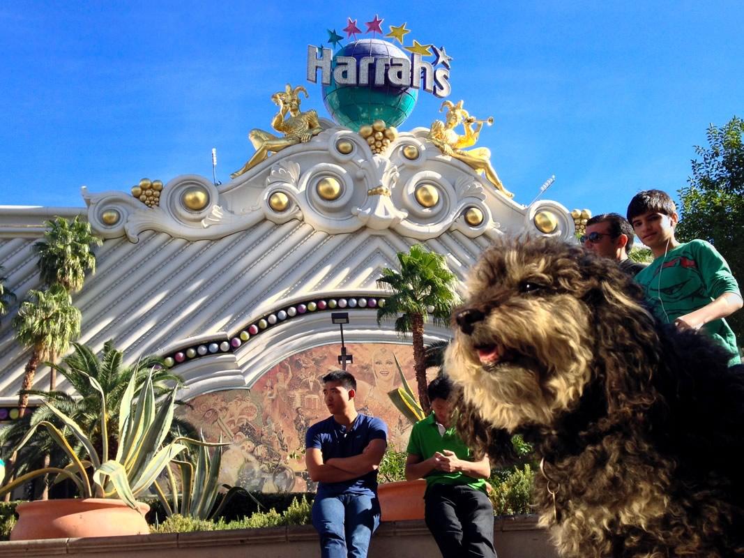 Willie in front of Harrahs in Las Vegas