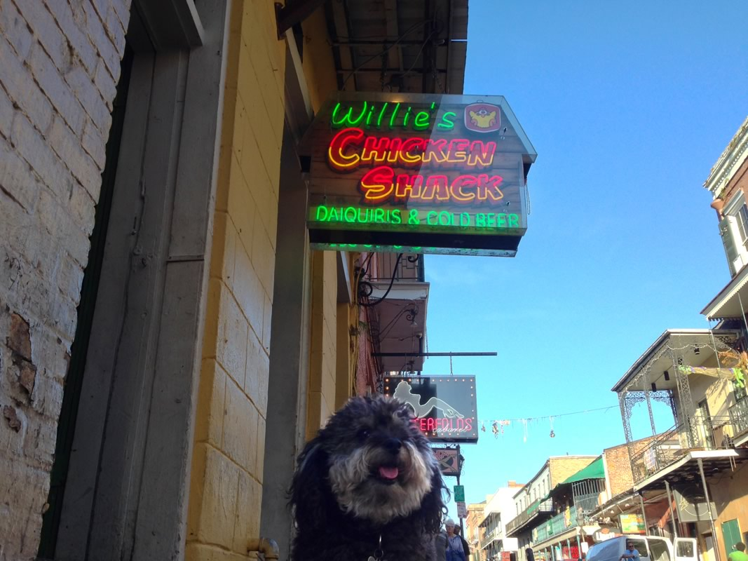 Willie stops at Willie's Chicken Shack on Bourbon Street in New Orleans