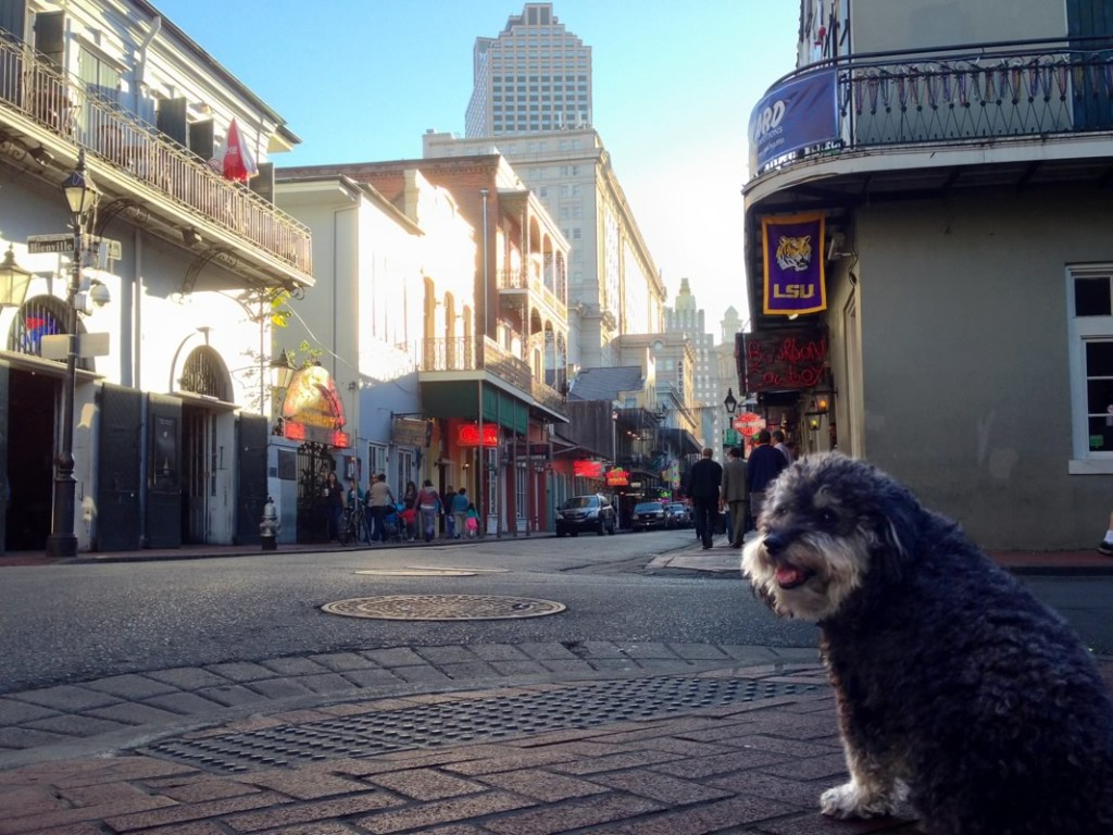 Willie stops for a photo on Bourbon Street in New Orleans