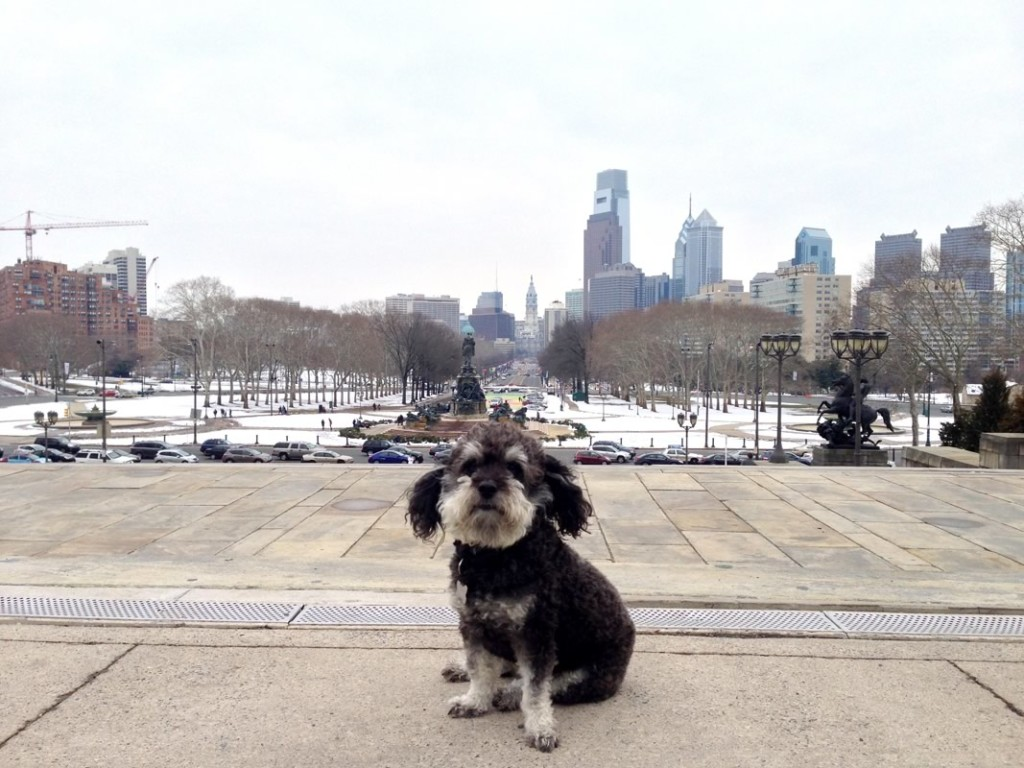 Willie on top of the Rocky steps in Philadelphia