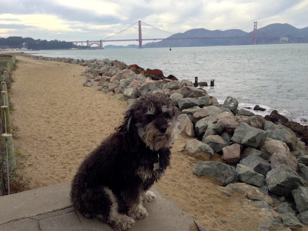 Willie poses in front of the Golden Gate Bridge in San Francisco