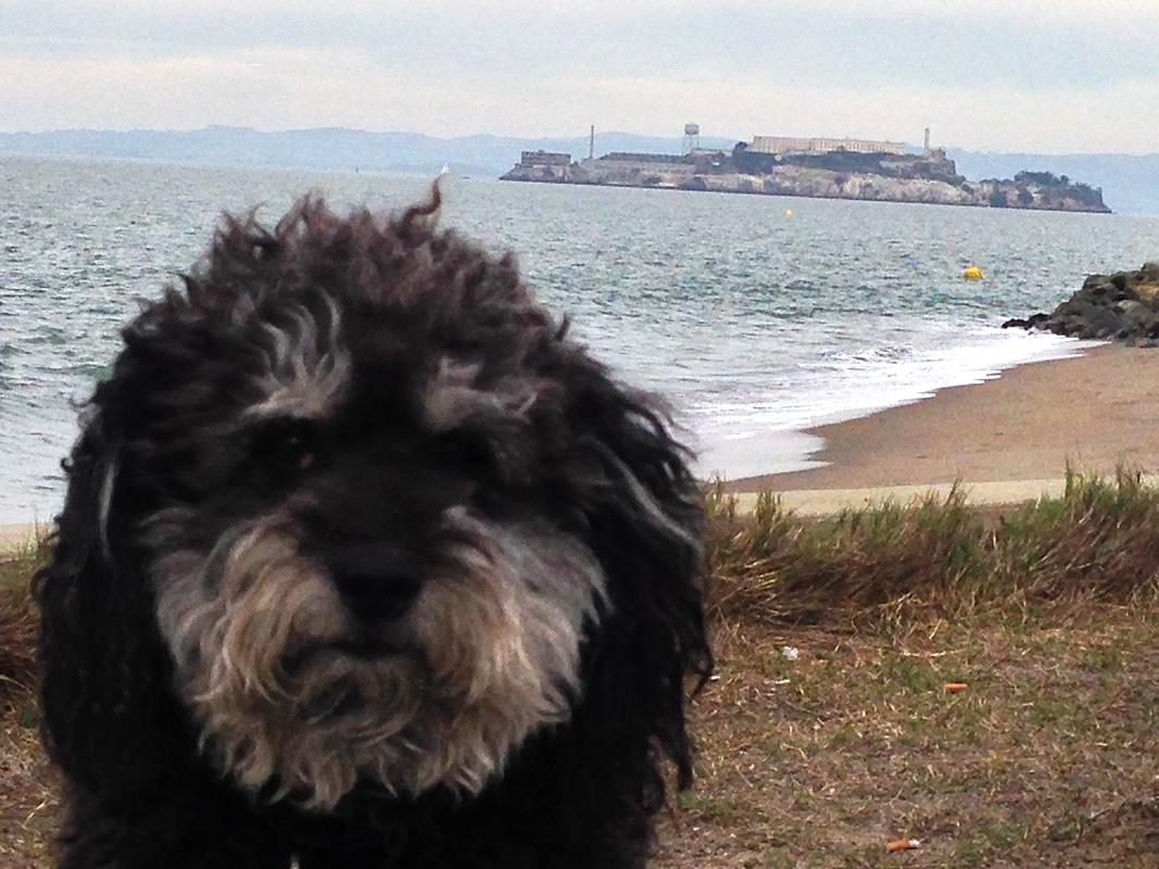 Willie in front of Alcatraz Island in San Francisco