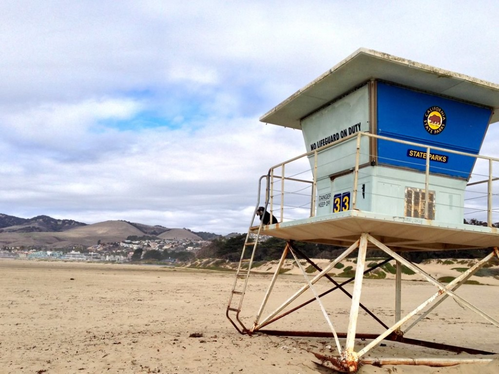 Willie sits in as lifeguard while on the beach in Ventura, CA