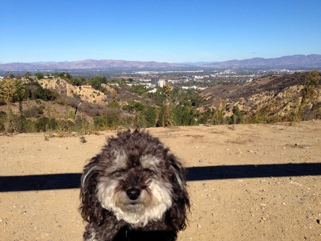 Willie stops for a photo along Mulholland Drive